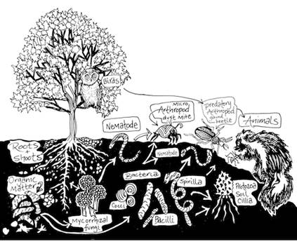 Ginny Ducale's PermaFest talk on 'The Living Soil'