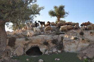 shepherds-cave