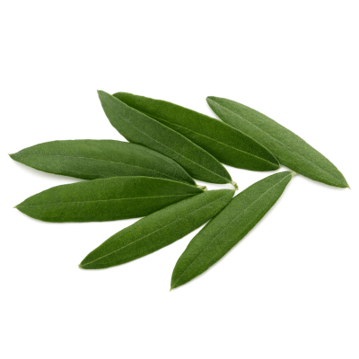 Olivenblätter