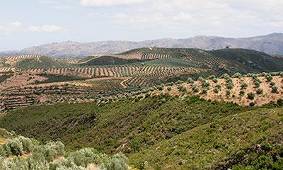Απόφαση ανάπτυξης μικρών γεωργικών εκμεταλλεύσεων Κρήτης