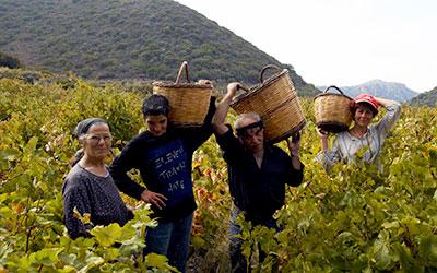 Αγροτουρισμός στην Κρήτη