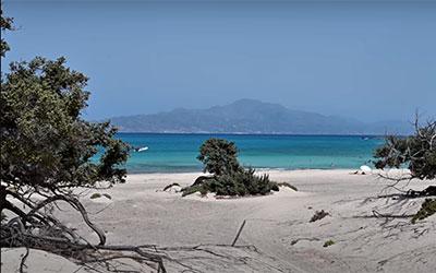Προστασία νήσου Χρυσής