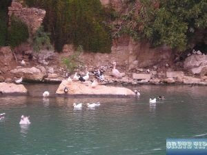 numerous waterfowl
