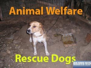 Animal Welfare Crete