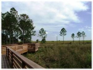 CREW Marsh boardwalk