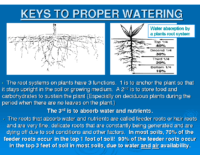 KEYS TO PROPER WATERING 2017 Presentation