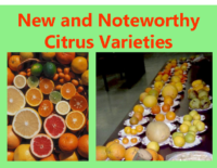 New and Noteworthy Citrus Varieties Presentation