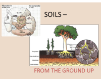 SOILS – FROM THE GROUND UP Presentation