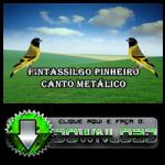 Pintassilgo Pinheiro Canto Metálico
