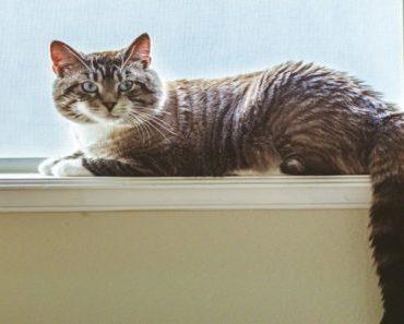 Comportamento felino: descubra tudo dos gatos
