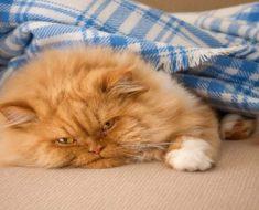 Doenças de pele em gatos: conheça e saiba como evitá-las!