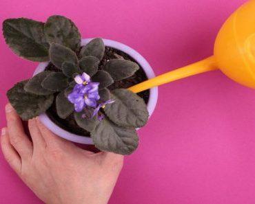 Tudo sobre jardinagem: 6 mitos e verdades sobre o tema