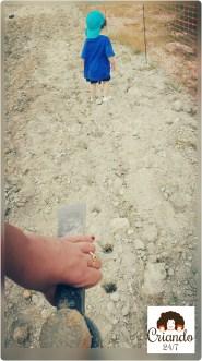 criando247 SembradoGirasoles4