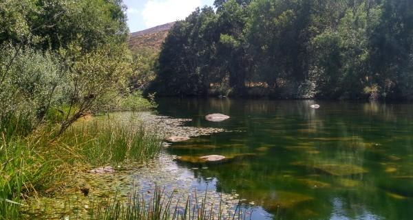 Charcas con vegetación de rivera y de aguas calmadas son los mejores sitios de observación de bichos