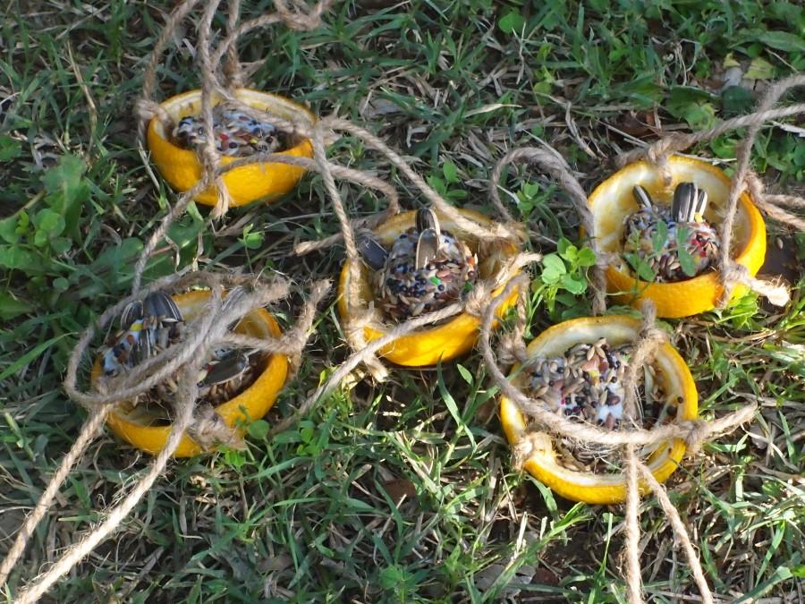 Comederos de aves mini hechos con cascaras de naranja  y colgados con pita