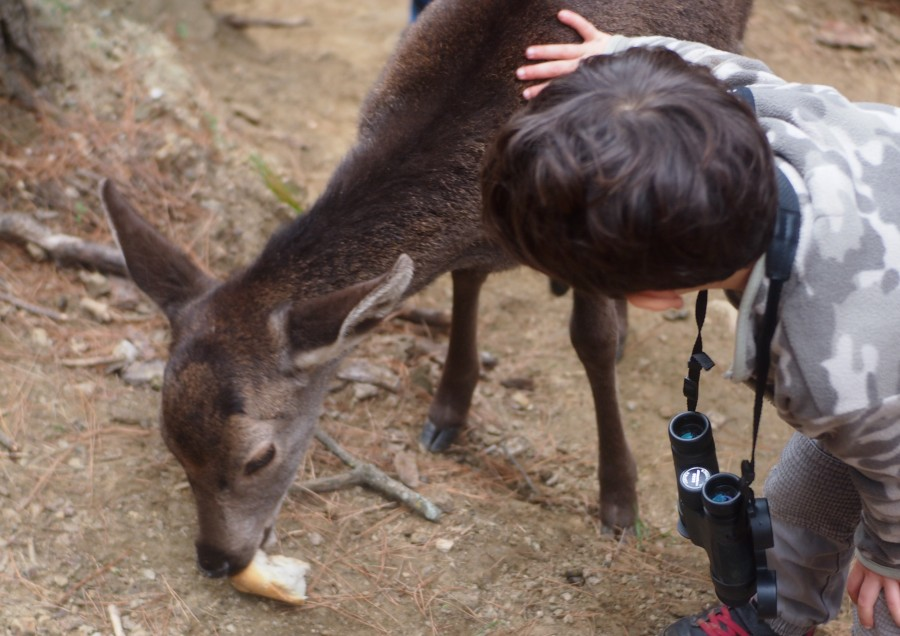 Niño acariciando un ciervo que esta comiendo pan