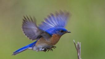 Bluebird2014