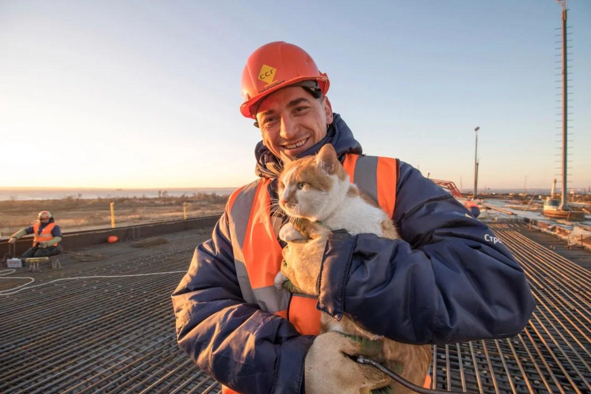 На стройке Керченского моста – акция «Обними кота»
