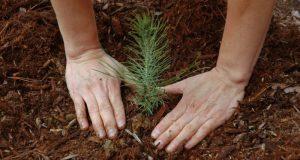 Лесной фонд Крыма планируют омолодить новыми посадками