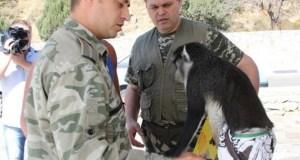 В Крыму создадут питомник для животных, пострадавших от человека