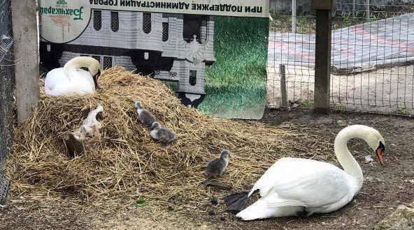 В Бахчисарайском парке миниатюр родилась... семья