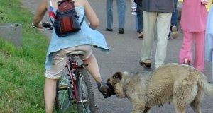 В Крыму людей кусают животные - в этому году пострадали 3077 человек