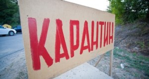 В Крыму снова объявлен карантин по африканской чуме свиней. На этот раз в окрестностях Алушты