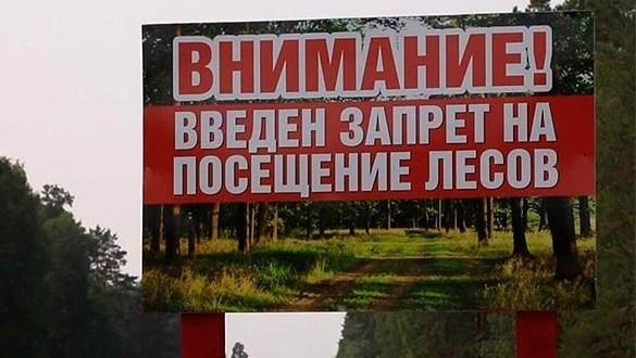 В Крыму на 21 день закрыли для посещения леса