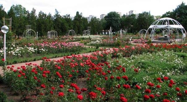 Ботанический сад Симферополя и воры - число краж уменьшилось