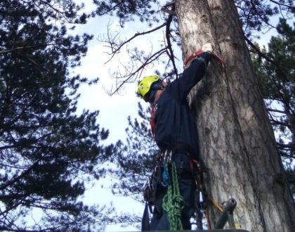 Крымские спасатели оказали помощь парапланеристу, застрявшему на дереве в лесу Южнобережья