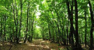Городские леса Крыма зарегистрируют