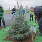 Глава Республики Крым Сергей Аксёнов посадил «своё дерево»