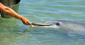 Прокуратура взяла на контроль проведение проверки по факту гибели дельфина у берегов Севастополя