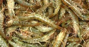Крымская прокуратура направила в суд уголовное дело о браконьерском вылове креветки