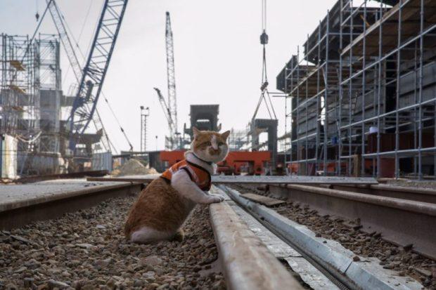 Первым по Крымскому мосту пройдет живой талисман стройки – кот Мостик