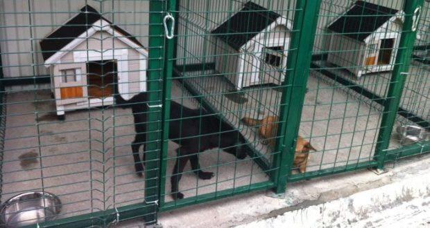 Приют для животных в Феодосии построят - нашли участок