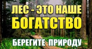 Специалисты Минэкологии Крыма просят сообщать о нарушениях лесного законодательства