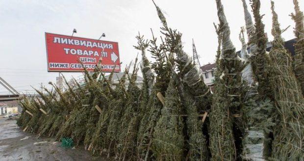 За незаконную продажу новогодних елей в Симферополе будут нещадно штрафовать
