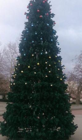 В центре Севастополя «обнесли» новогоднюю ёлку
