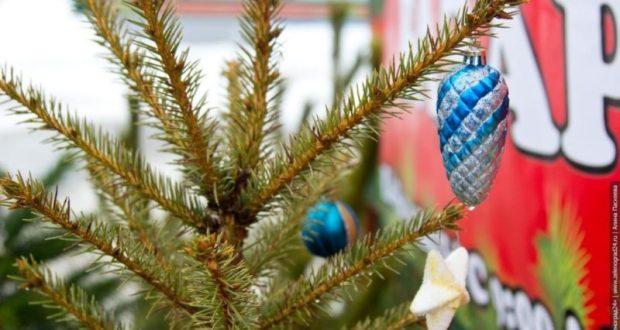 Теперь точно! С 22 декабря в Симферополе заработают ёлочные базары