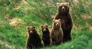 Новогодний сюрприз в крымском парке львов «Тайган». Родились медвежата