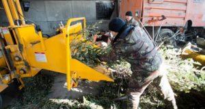 На что сгодятся выброшенные симферопольцами новогодние ёлки