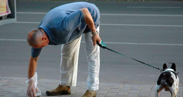 """Депутаты Госсовета РК хотят наказывать """"рублём"""" владельцев собак, не убирающих за своими питомцами на улицах"""