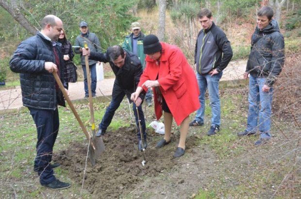 В Никитском ботаническом саду теперь растёт дуб - потомок дерева, посаженного Петром I