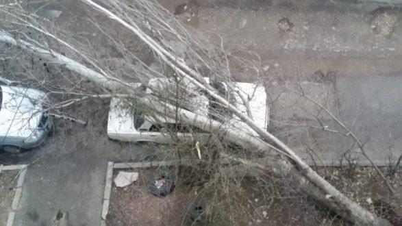 Ночью в Севастополе ветер повалил тополя. Одно дерево рухнуло прямо на машины