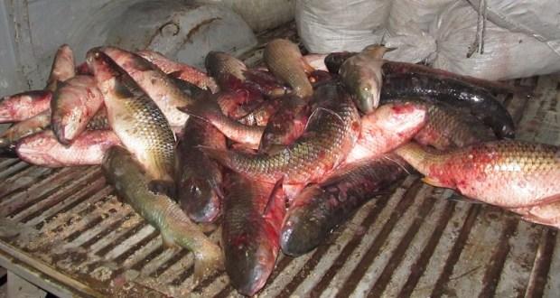 В Керчи задержан браконьер. Ловил пиленгаса сетями