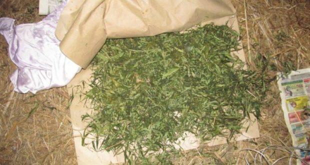 Житель Ленинского района Крыма 23 кг конопли и 5, 225 г опия хотел употребить сам