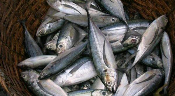 В Алупке отправили на утилизацию 39 килограммов рыбы