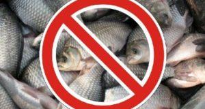 Рыбалка в Крыму запрещена! На два месяца. Но не везде
