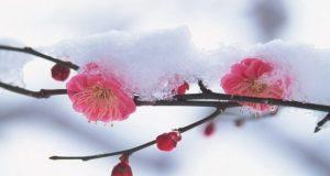Погода в Крыму: температура ползёт вверх